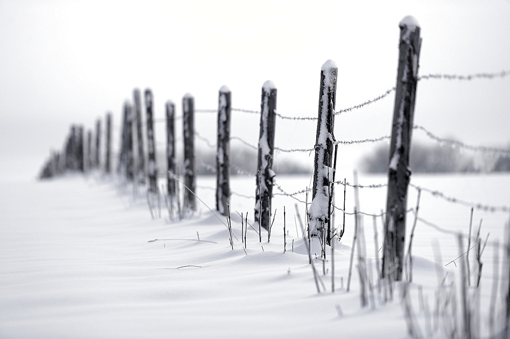 Fence in winter, Mindelheim, Unterallgaeu, Bavaria, Germany, Europe