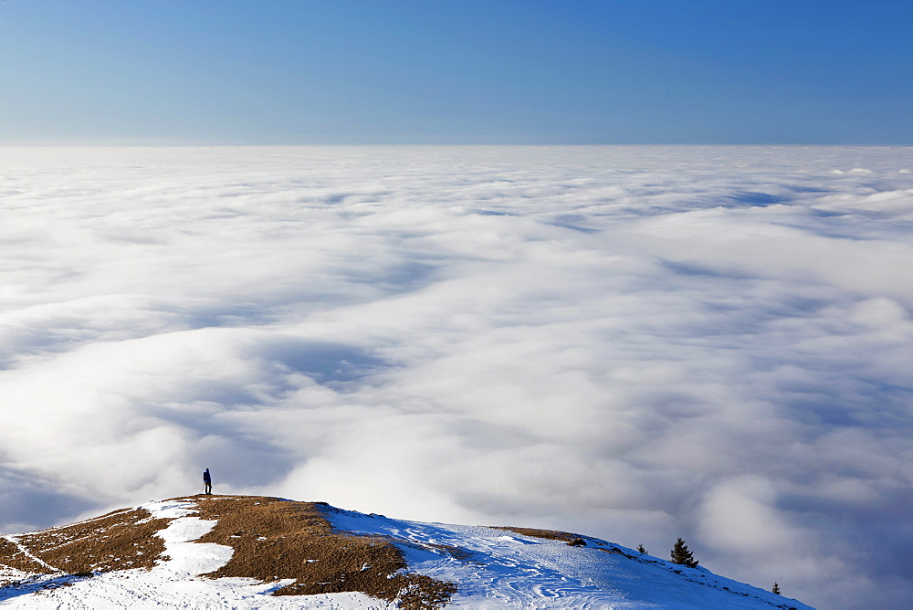 Lonely hiker walking above a sea of fog, low clouds, on Faehnerenspitze mountain in the Appenzell region, Switzerland, Europe