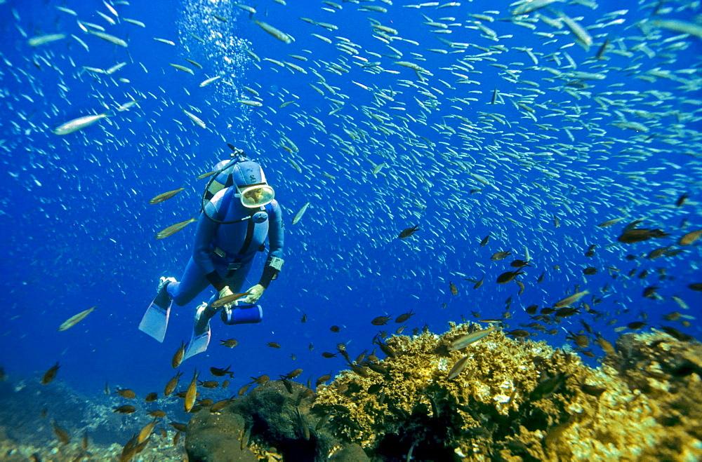 Diver is swimming with sardines Turkey, Mediterranean Sea.