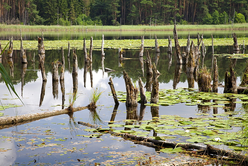 Lake Muehlen, Mueritz National Park, Mecklenburg-Western Pomerania, Germany, Europe