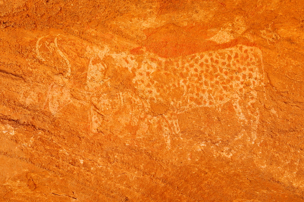 Rock engraving of a cow, neolithic rock art of Tasset Plateau, Tassili n'Ajjer National Park, Unesco World Heritage Site, Wilaya Illizi, Algeria, Sahara, North Africa, Africa