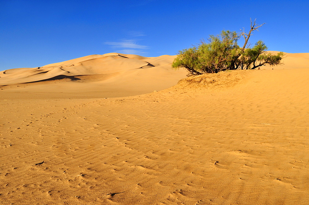 Sand dunes of Erg Admer, Wilaya Illizi, Algeria, Sahara, North Africa