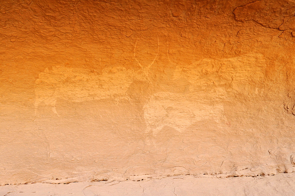 Neolithic rock art, painting of cows or bulls, Tasset Plateau, Tassili n'Ajjer National Park, Unesco World Heritage Site, Wilaya Illizi, Algeria, Sahara, North Africa