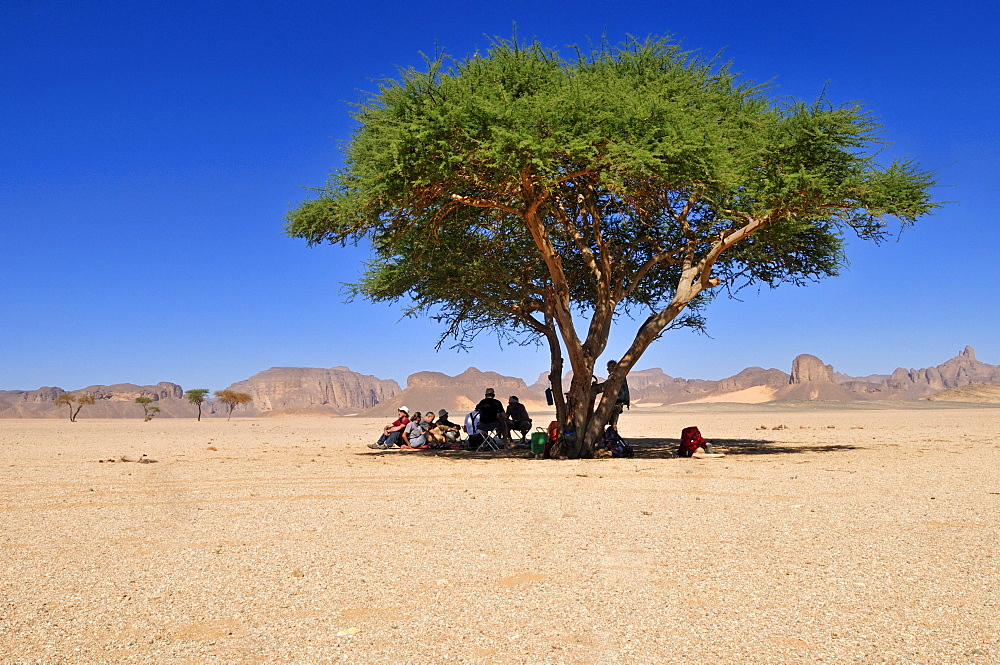 Group of tourists resting under an acacia tree, Tassili n'Ajjer National Park, Unesco World Heritage Site, Wilaya Illizi, Algeria, Sahara, North Africa