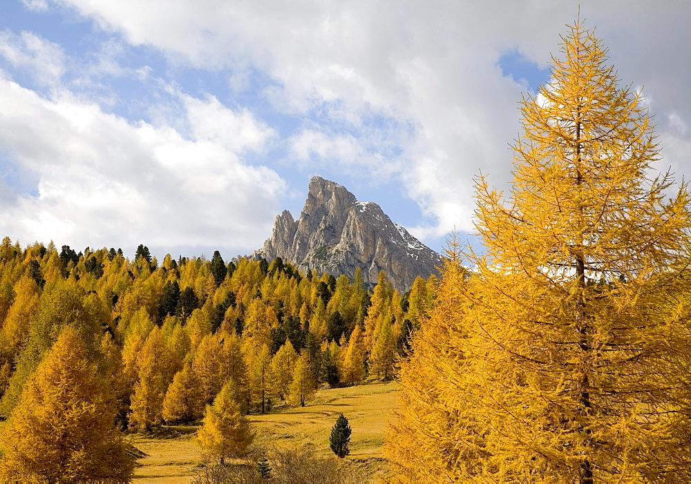 Larch trees near Cortina d'Ampezzo in autumn, Italy, Europe
