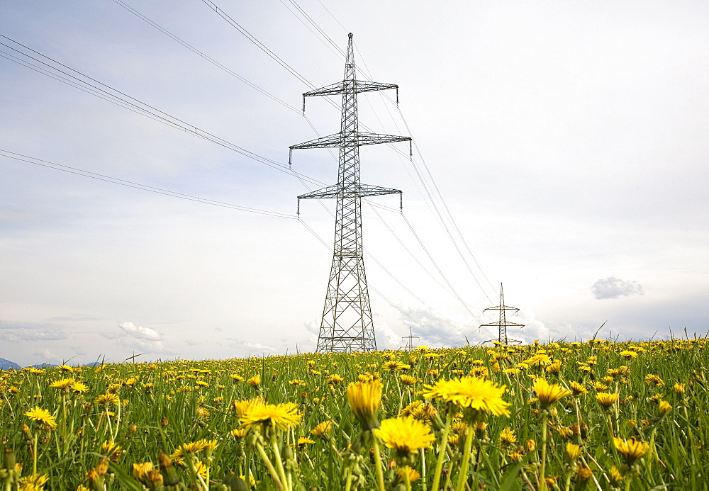 Electricity pylons, power poles, flowering meadow with dandelions, Paehl, Upper Bavaria, Bavaria, Germany, Europe