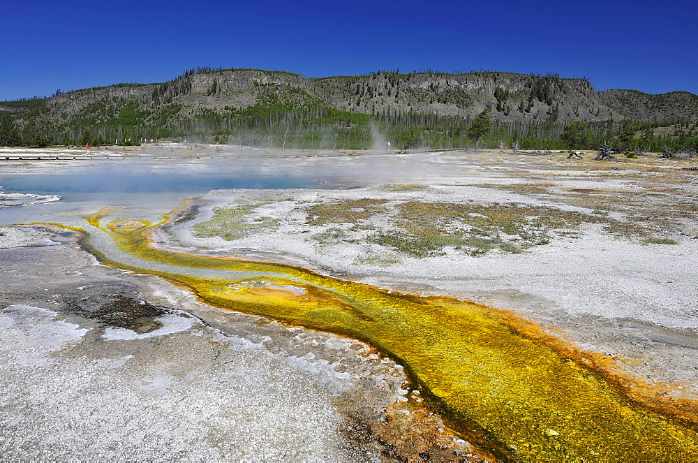Drainage area of the Sapphire Pool, geyser, coloured thermophilic bacteria, microorganisms, Biscuit Basin, Upper Geyser Basin, Yellowstone National Park, Wyoming, United States of America, USA