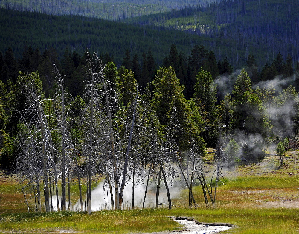 View over Upper Geyser Basin, geothermal springs in Yellowstone National Park, Wyoming, United States of America, USA