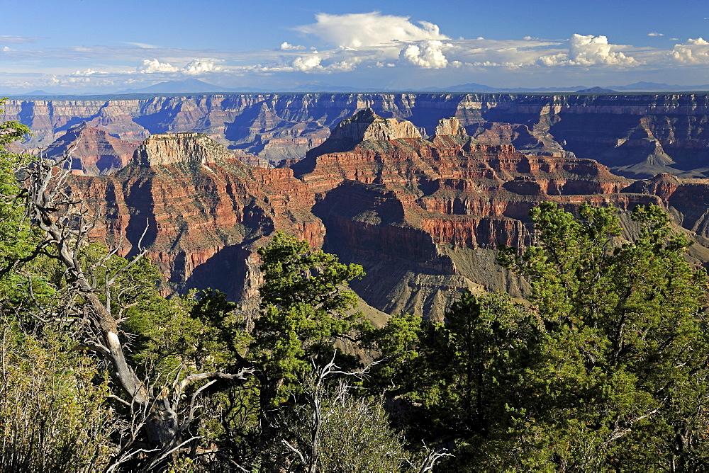 Evening at Bright Angel Point, Grand Canyon North Rim, Arizona, USA, America
