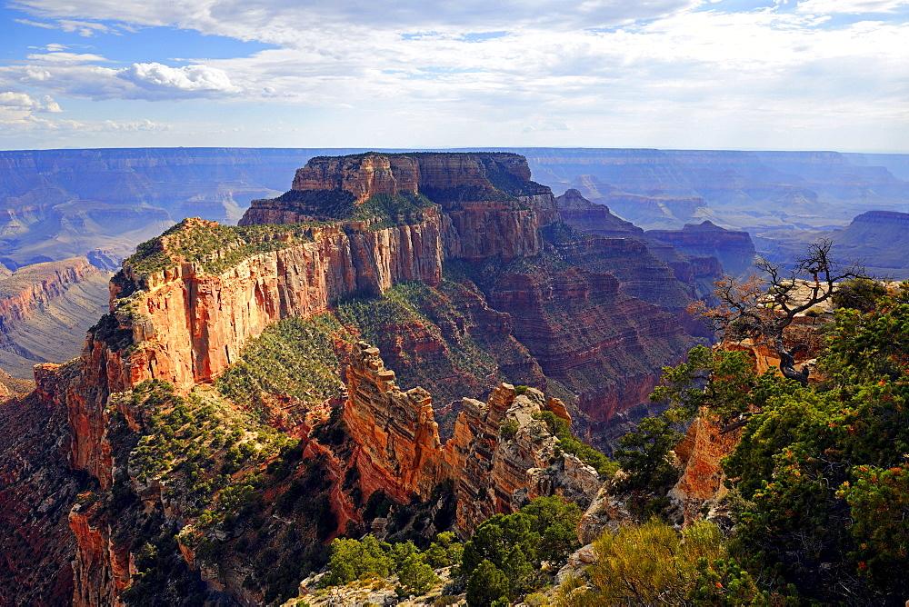 Evening mood, Grand Canyon North Rim, Cape Royal, Arizona, USA, America