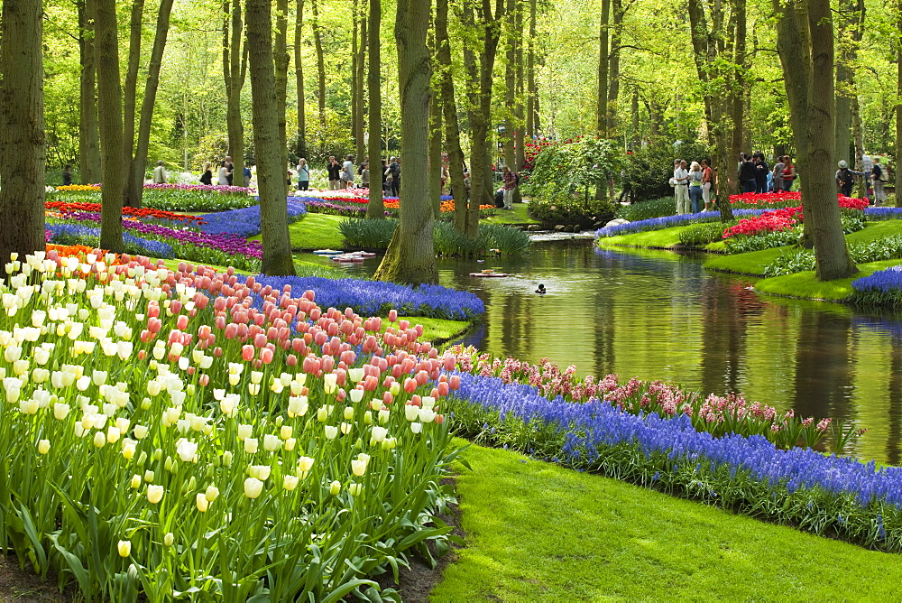 Annual flower show with mostly tulips, Keukenhof flower garden, Lisse, North Holland province, Netherlands, Europe - 832-125036