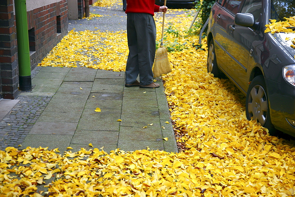 Man with a broom sweeping autumn leaves from the pavement outside his house, Germany, Europe