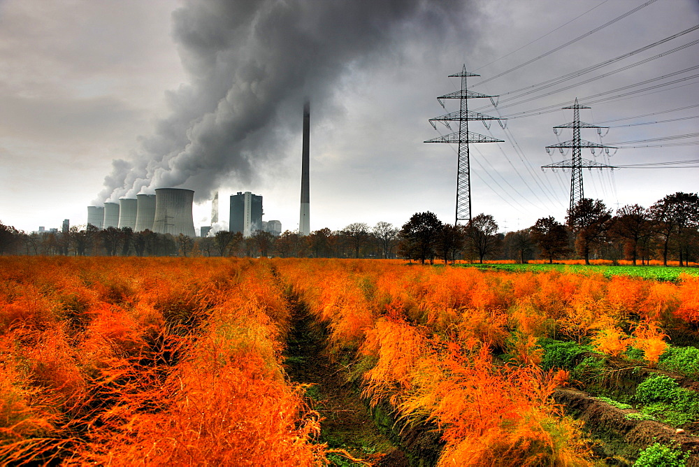 Faded asparagus field in autumn, in the back the E.ON coal power plant in Gelsenkirchen-Scholven, North Rhine-Westphalia, Germany, Europe
