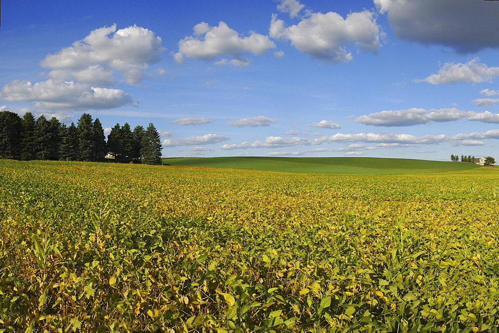 Cultivated landscape, Oconomowoc, Wisconsin, USA, America