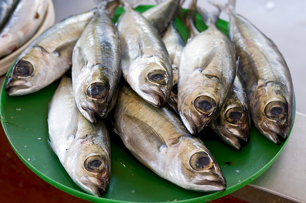 Fish, San Vincente, Mindelo, Cabo Verde, Cape Verde, Africa