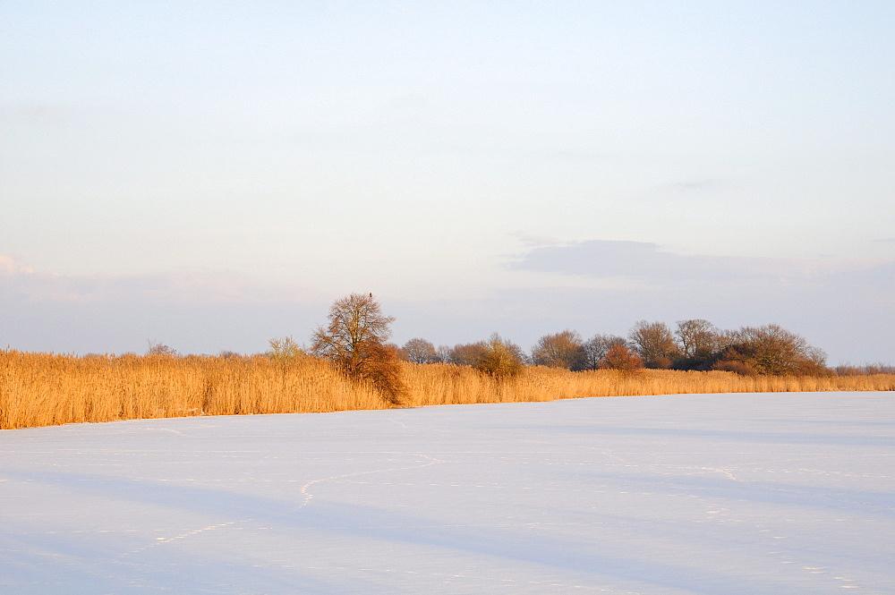 Frozen oxbow lake of the Elbe river near Klieken, Saxony-Anhalt, Germany, Europe