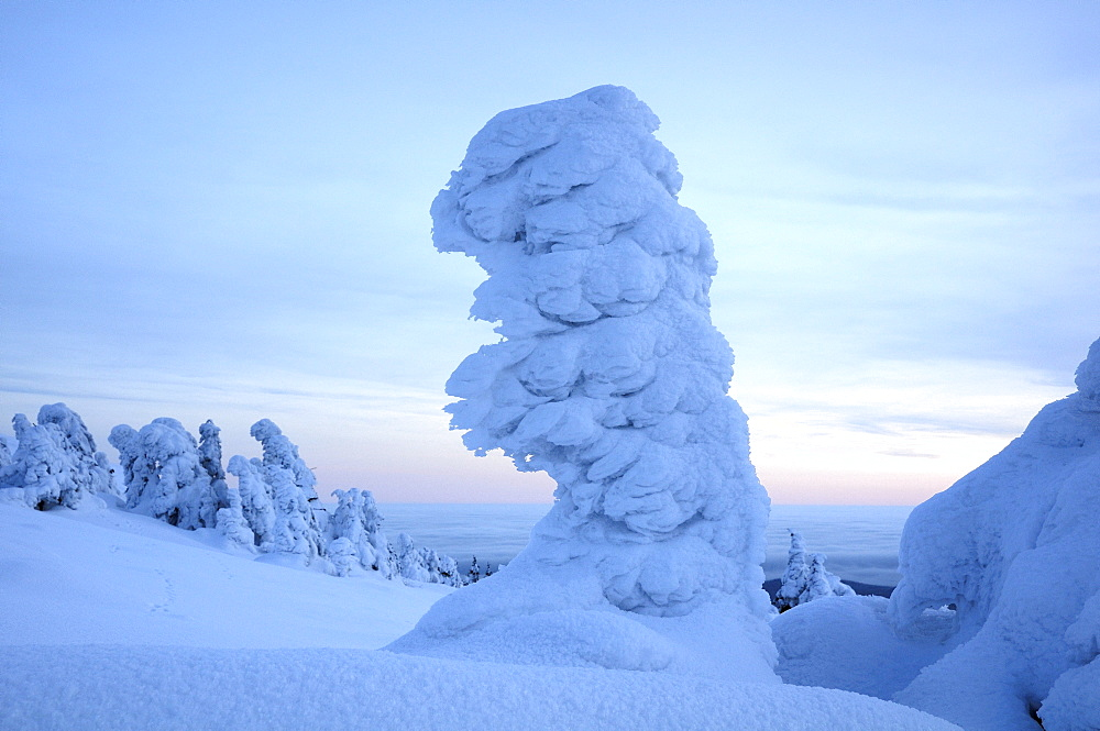 Snow-covered spruce in the evening, Brocken mountain, Saxony-Anhalt, Germany, Europe