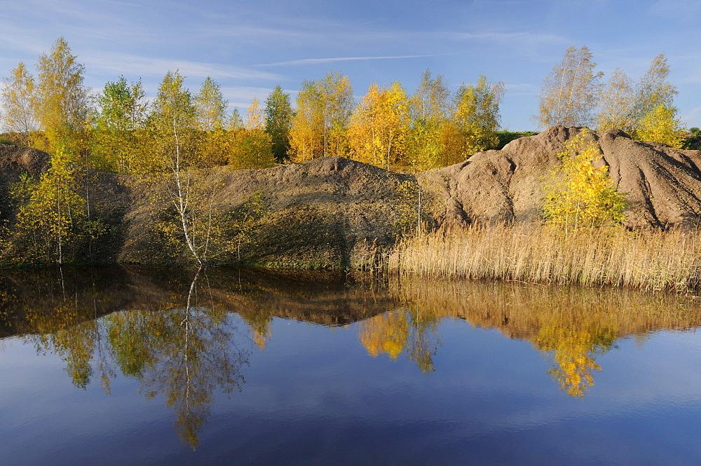 Birches in autumn in a mine near Leipzig, Saxony, Germany, Europe