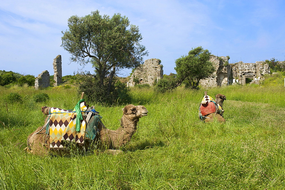 Camel for tourists at the ruins of Side, Turkish Riviera, Turkey, Western Asia