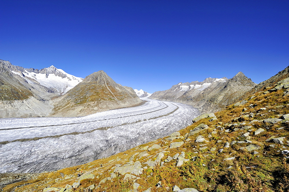The 23, 1 km long Aletsch Glacier, Canton of Valais, Switzerland, Europe