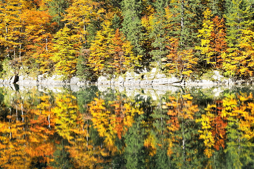 Autumn colored mixed forest on the banks of Seealp Lake, at 1143 m altitude, in the Appenzell Alps, Canton of Appenzell Inner-Rhodes, Switzerland, Europe