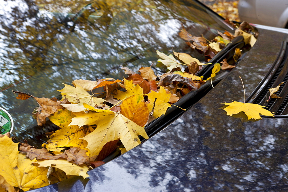 Autumn leaves behind the window wipers of a vehicle