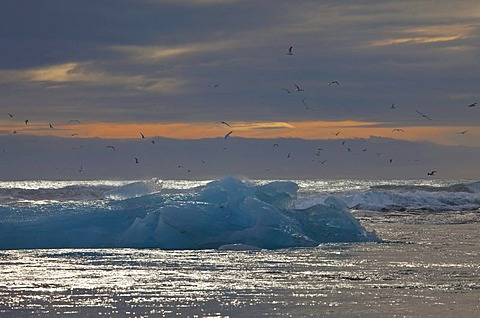 Icebergs floating on the sparkling sea and flying seagulls at sunrise, Jokulsarlon, Iceland, Europe
