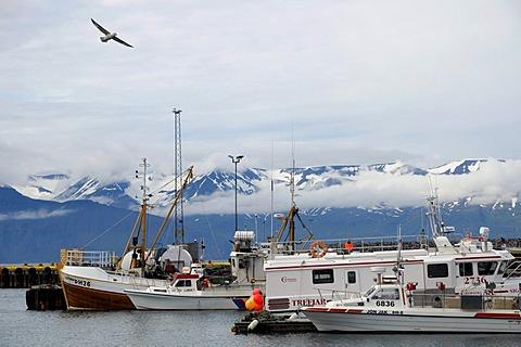 Port of Husavik, Iceland, Europe