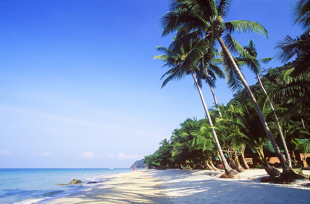 Coconut palm trees on White Sand Beach, Hat Sai Kao, Koh Chang Island, Trat, Thailand, Southeast Asia