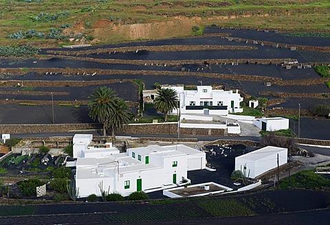 Farming village in a lava field, Los Valles, Lanzarote, Canary Islands, Spain, Europe