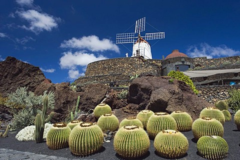 Wind mill in a cactus garden, Golden Barrel Cactus (Echinocactus grusonii), Jardin de Cactus, built by the artist Cesar Manrique, Guatiza, Lanzarote, Canary Islands, Spain, Europe