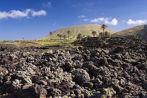 Volcanic landscape near Uga, Lanzarote, Canary Islands, Spain, Europe