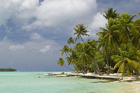 Beach, Bora-Bora, French Polynesia, Pacific Ocean