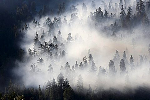Wads of smoke from a forest fire pervading Sequoia National Park, California, USA