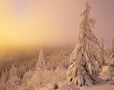 Winter landscape at sunset, Mt. Feldberg, Black Forest, Baden-Wuerttemberg, Germany, Europe