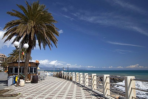 Palm tree on the beach promenade, Albenga, Riviera, Liguria, Italy, Europe