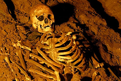 Skull and skeleton from the stone age, Cheddar Man Museum of Prehistory, Cheddar, Somerset, England, United Kingdom, Europe
