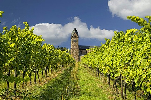 The monastery of St. Hildegard with vineyards in Ruedesheim, founded by Hildegard von Bingen, Rheinland Pfalz, Germany, Europe