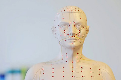 Bust, acupuncture model