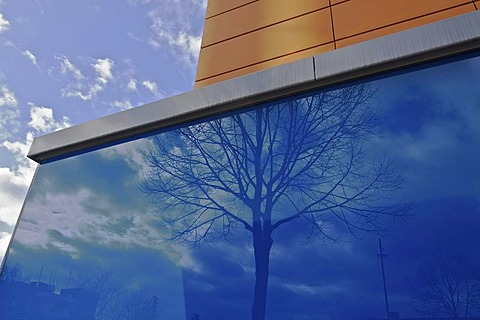 Reflection of a tree in a blue glass facade, Bonn, North Rhine-Westphalia, Germany, Europe