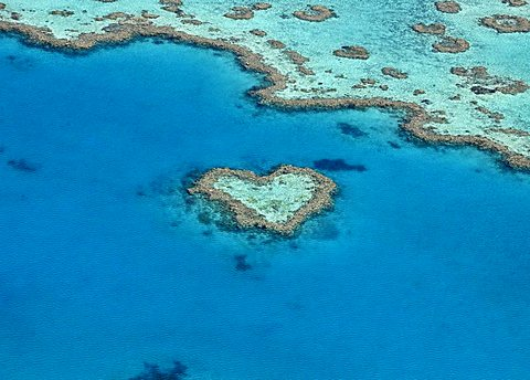 Aerial view of the ocean floor, Heart Reef, heart-shaped reef, Great Barrier Reef World Heritage Area, Great Barrier Reef, UNESCO World Heritage Site, Queensland, South Pacific, Australia - 832-14584