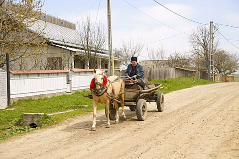 Horse cart, horse with red collar for improved visibility, Romania, Europe