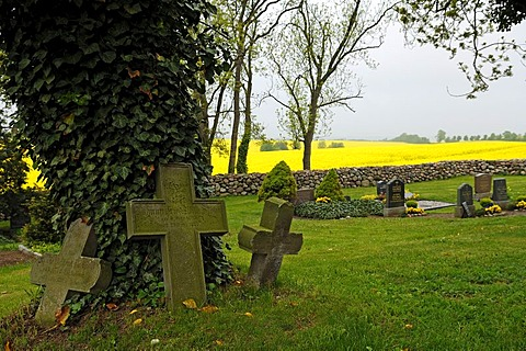 Three old grave crosses at an ivy-covered tree in the cemetery of the village church, Hohenkirchen, Mecklenburg-Western Pomerania, Germany, Europe