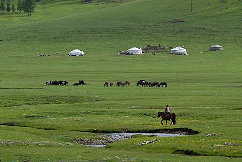 Mongolian child riding on a horse towards a summer camp of the nomads with a yak herd, ger or yurts round tents, in a lush green grass landscape near the Khuisiin Naiman Nuur Nature Reserve, Oevoerkhangai Aimak, Mongolia, Asia