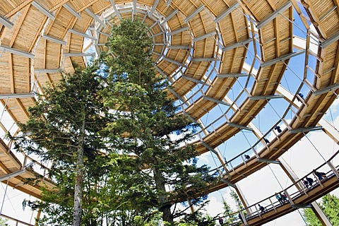 Tree tower, treetop walkway, Bavarian Forest National Park, Neuschoenau, Lower Bavaria, Germany, Europe