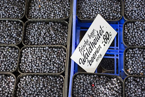 Fresh wild blueberries, stall on the Viktualienmarkt food market, Munich, Bavaria, Germany, Europe
