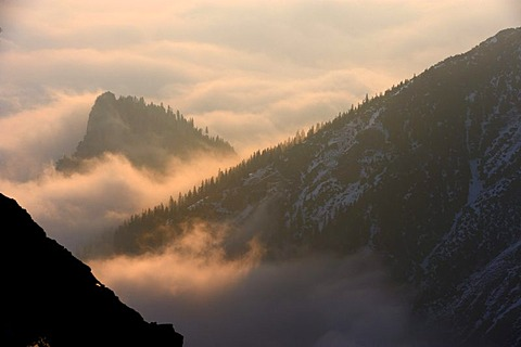 Forested mountain peaks above a layer of fog, Graen, Tannheimertal valley, Ausserfern, Tyrol, Austria, Europe