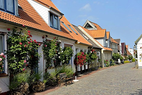 Old houses in the fishing village Holm, Schleswig, Schleswig-Holstein, northern Germany, Germany, Europe