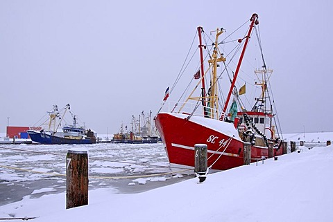 Fishing boats in the frozen harbour of Buesum in winter with snow on the North Sea coast, Dithmarschen district, Schleswig-Holstein, Germany, Europe