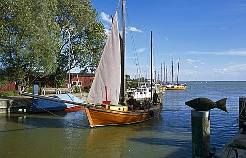 Sailboats, Zeesboot, Wustrow, Fischland-Darss-Zingst, Mecklenburg-Vorpommern, Germany, Europe